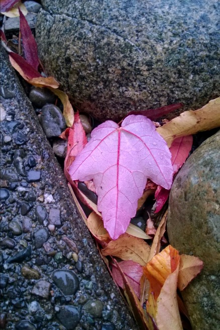 This was a leaf in our backyard that dared me to take a picture of it. Apparently I can't refuse dares from leaves. ;)